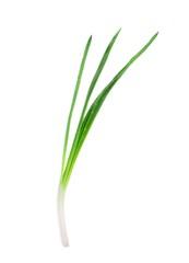 Green Onion on white background