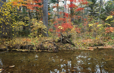 Autumn forest with reflection in the water