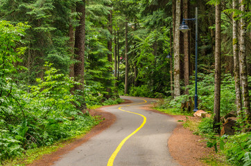 Winding Paved Cycle Path Through a Forest