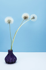 Dandelion and thistle seeds bouquet on table