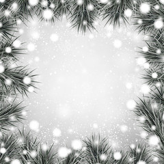 Silver christmas background with spruce branches.