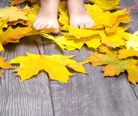 baby foot on the wooden floor strewn with yellow maple leaves