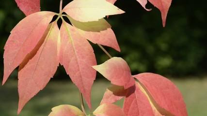 Blätter im Herbst wehen im Wind