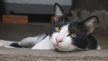 Adorable cat laying at doorsill
