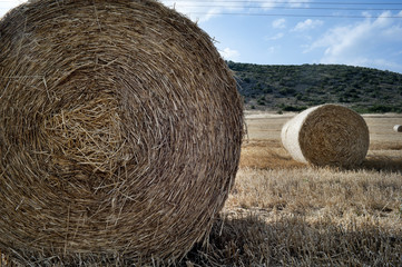 Straw bales in a farmland at the end of the summer