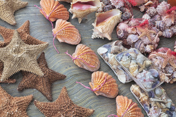 Beautiful souvenir seashells for sell in Cancun Mexico