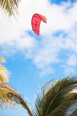 voile de kite-surf au-dessus des palmes de cocotiers