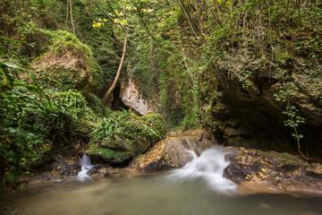 Cascata nella foresta rigogliosa