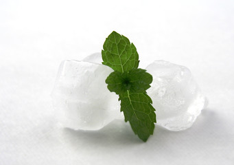 Ice and mint on white