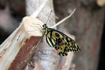 Schmetterlingstag