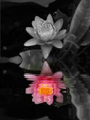 reflet en couleur