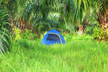 Tourist tent in palm plantation