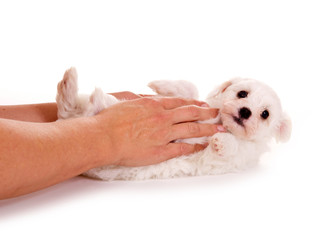 Hundebaby lässt sich kraulen