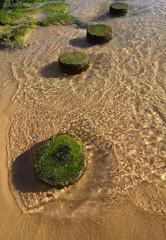 Holzpfähle am Strand