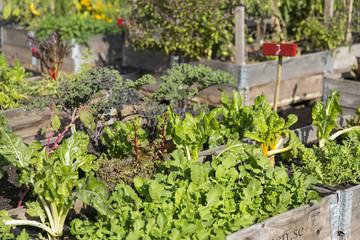 Gewächshaus mit Gemüsebeeet Urban Gardening
