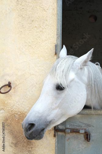 horse © lapas77