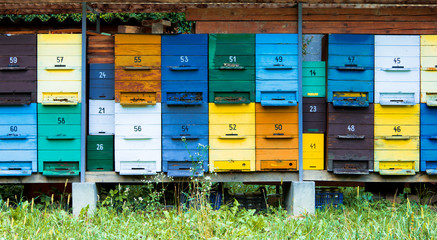 colorful hives
