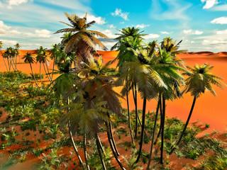 Palm trees on desert