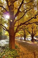Sunny autumn day.