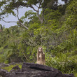 Beautiful lady in the rainforest