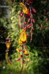 Pflanzen im tropischen Regenwald