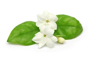 arabian jasmine,  jasmine tea flower