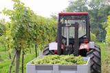 Wein - 007 - Lese - Traktor - Fine Art prints