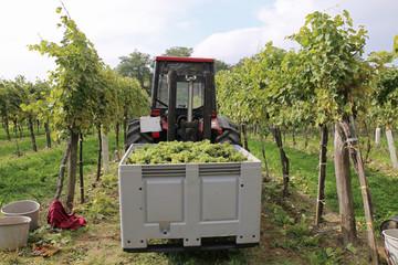 Wein - 006 - Lese - Traktor