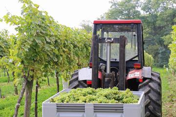 Wein - 007 - Lese - Traktor
