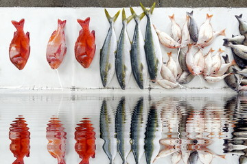 Fish Market selection