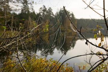 Autumn spider web on the lake coast