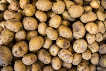 potatoes on a market.  Fresh organic young potatoes