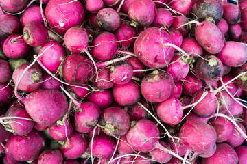 Many fresh radishes on  market.  Farmer Market Fresh Radishes