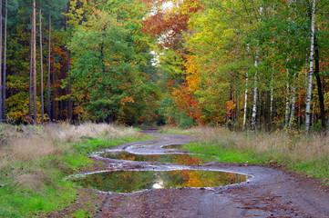 Las jesienią.