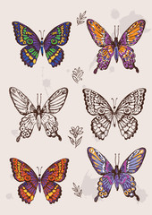 Set of colorful isolated butterflies.