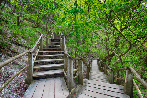 canvas print picture Holztreppe im Wald