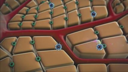 liver cells, virus