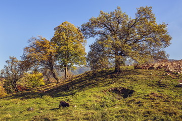 Autumn landscape uphill with grazing goat