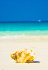 Exotic Shore Beach Pearl