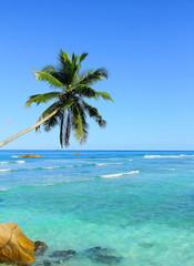Beauty Seaside Dream