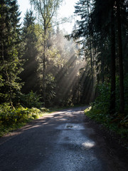 forest road with sun rays in the morning