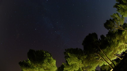 Milky way time lapse and row of mediterranean pine trees