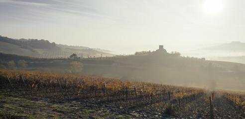 Tuscany vineyard, fog landscape