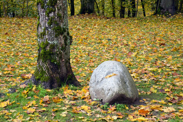 Boulder and a tree in the forest