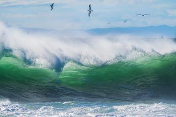 荒波と海鳥