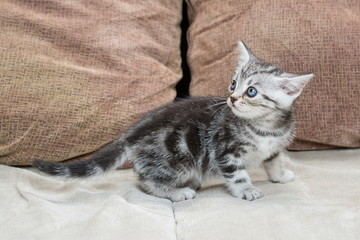 Kitten on sofa - Stock Image