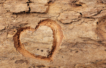 Heart carved in tree bark
