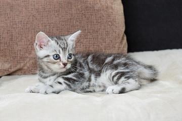 Kitten on sofa - Stock Image