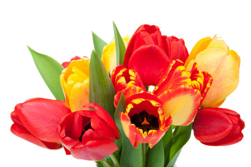 Fresh colorful tulips bouquet