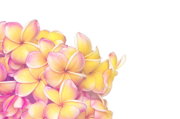 Flowers in pastel styles.